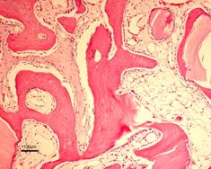gel_40_microscop.jpg